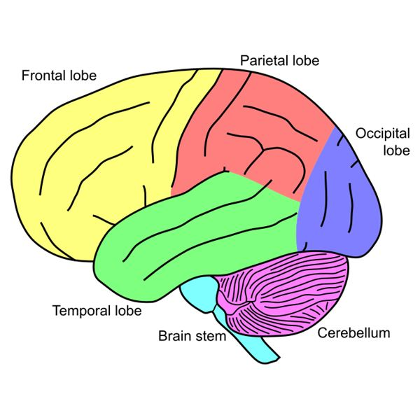 Researchers see brain volume loss after concussion - Arizona ...