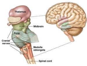 brain and brain stem headache