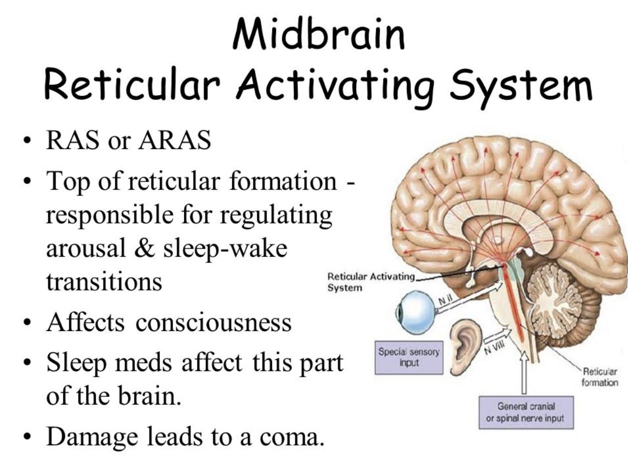 Natural Remedies To Improve Insomnia - Arizona Chiropractic Neurology